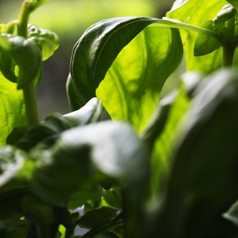 Deine Lebensmittel sollten pflanzlich sein. Das wäre perfekt.